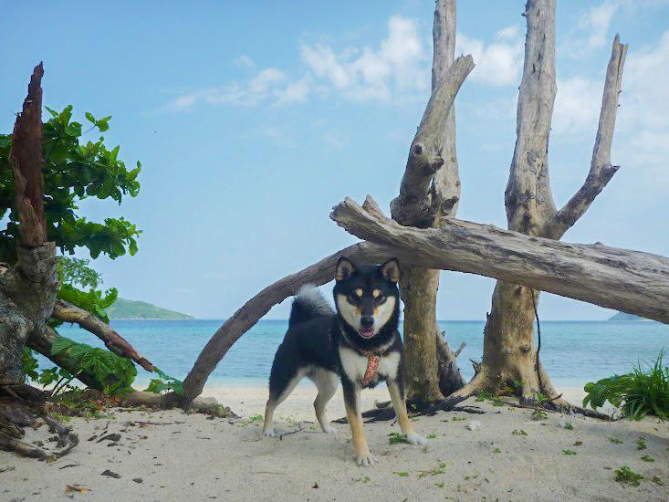 さくらとイダの浜