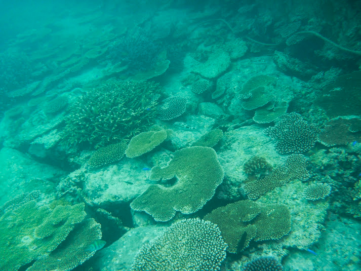 珊瑚がいっぱい!