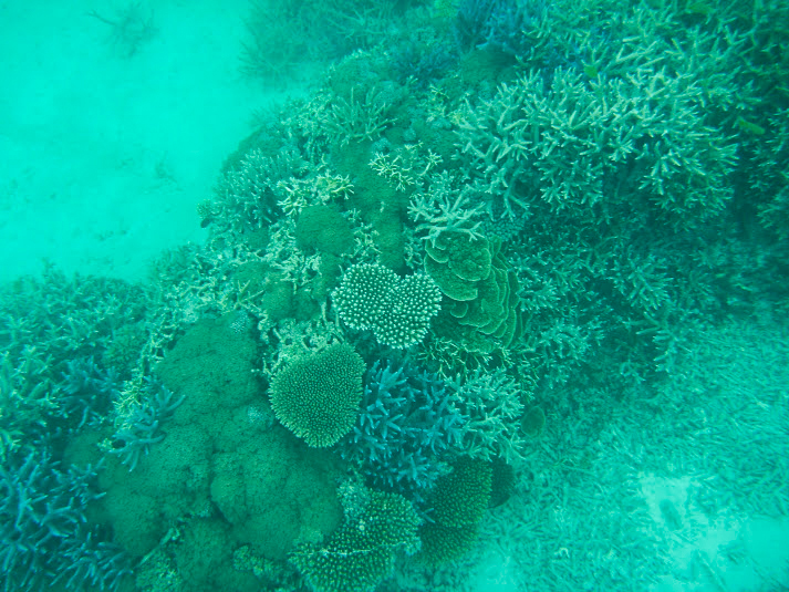 港とは思えない珊瑚たち