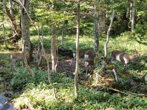 野生の鹿に遭遇