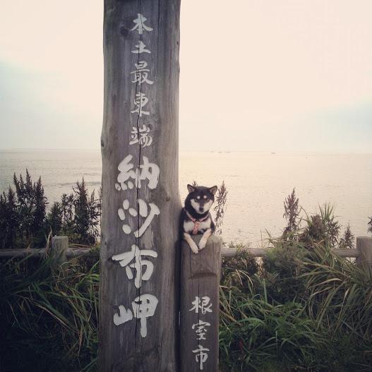 最東端の犬!