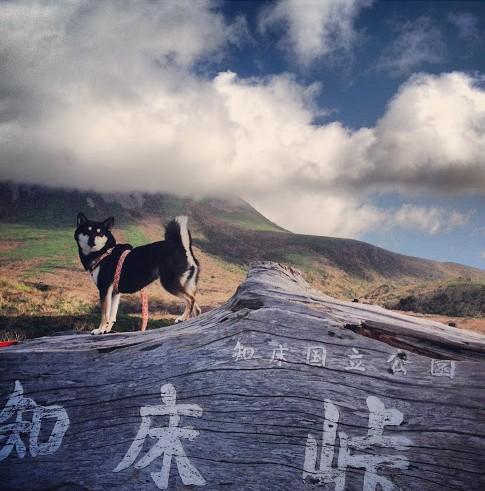 知床峠の犬!