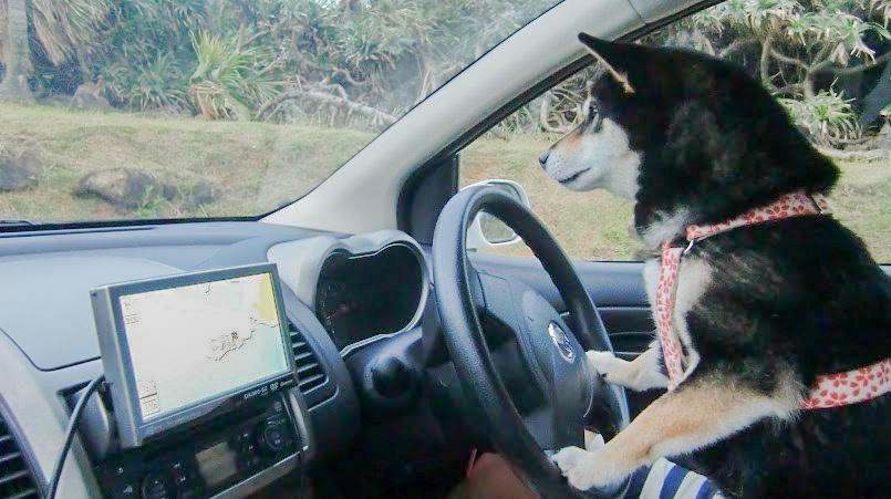 ドライブだよ