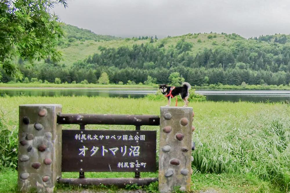 オタトマリ沼の犬