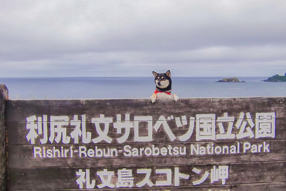 最北限の犬!