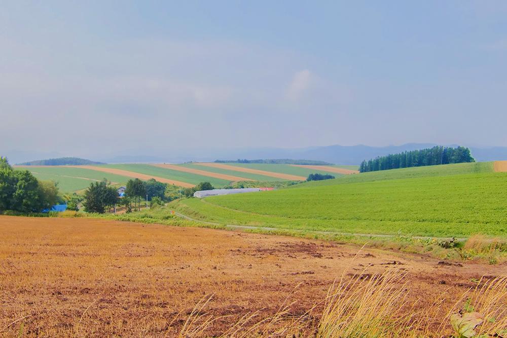 美しい美瑛の丘