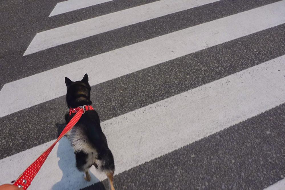 仙台市街を歩くさくらさん