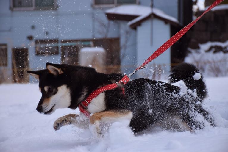 雪が大好きなさくらさん