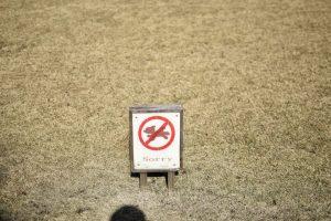 芝生広場はワンコ不可!
