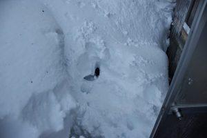 雪だらけ(真っ裸で埋もれた跡)