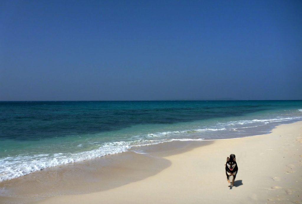 長間浜とさくら