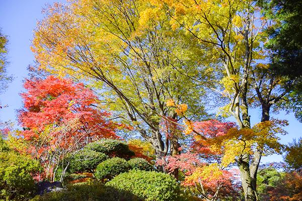 フランス式整型庭園を紅葉とともに