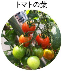 トマトの葉