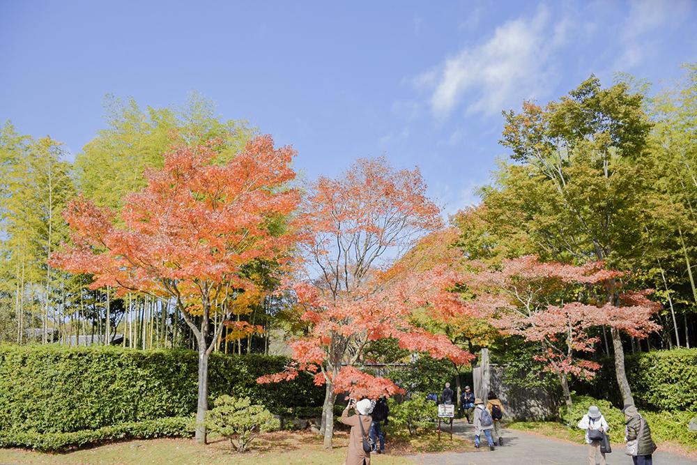 日本庭園前