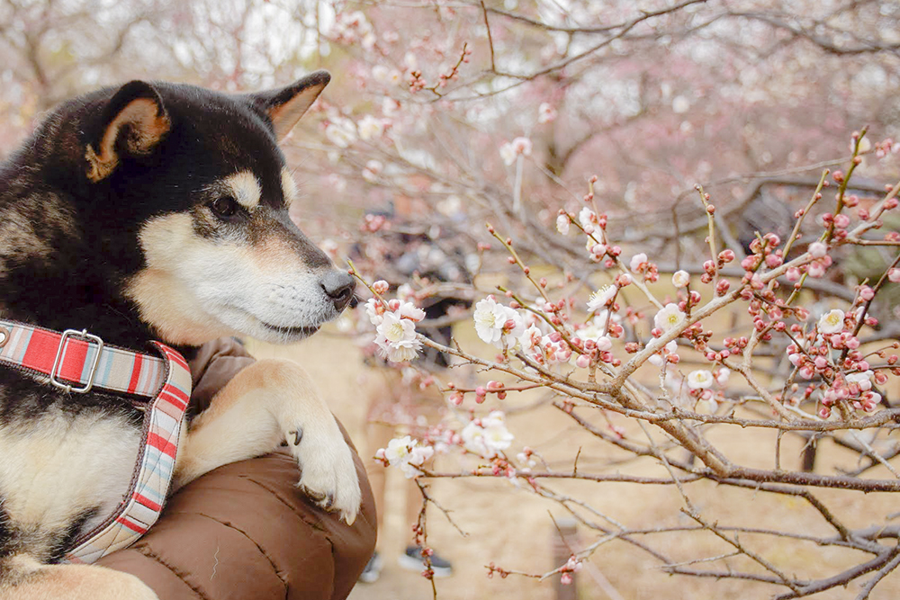 春の訪れを告げる梅